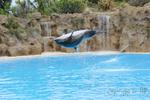 Delfin Jump