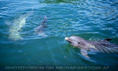 Dolphin Research Center 03