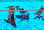 Dolphin Show 09