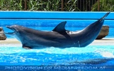 Dolphin Show 17