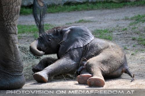 Baby Tuluba ausgelassen