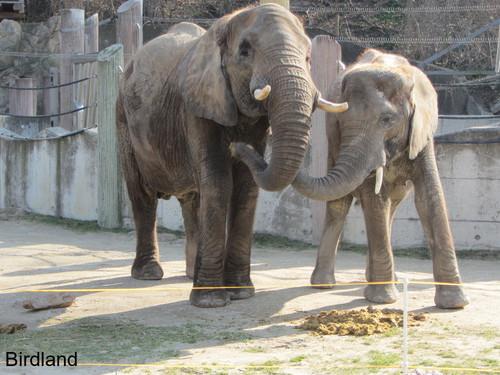 Elefanten: Elefanten