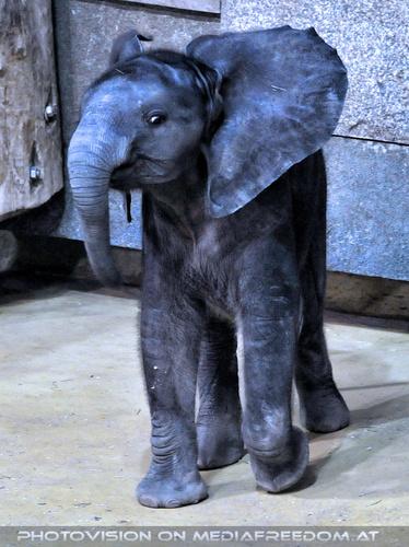 Elefantenfamilie 11