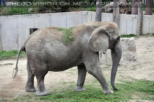 Begrünter Elefant
