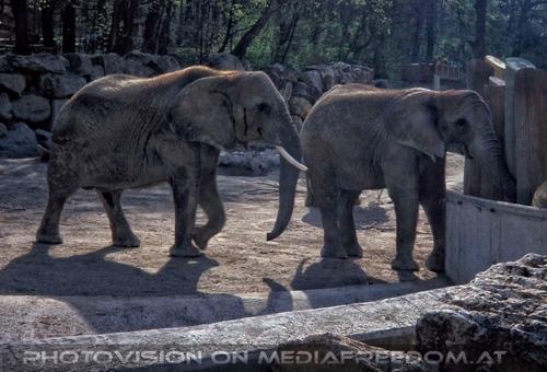 Elefanten Duo