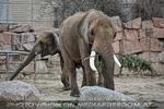 Afrikanische Elefanten 02