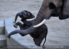 Elefanten Familie 1