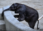 Elefanten Familie 2