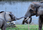 Elefanten Familie 3