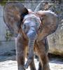 Elefanten Familie 4