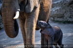 Elefantenbaby 2