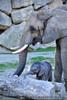Elefantenbaby 3