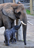 Elefantenfamilie 01