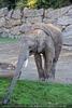 Afrikanische Elefanten 03