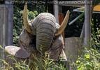 Aufbäumender Elefantenbulle