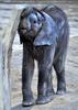 Babyelefant 2