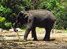 Namuang Jungle Elephant Trip 29