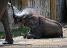 Die Elefanten Dusche 10