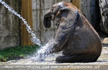 Die Elefanten Dusche 11