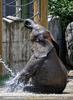 Die Elefanten Dusche 12