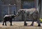 Die Elefanten Dusche 16