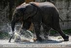 Die Elefanten Dusche 17