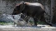Die Elefanten Dusche 18