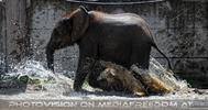 Die Elefanten Dusche 19