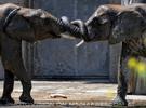 Die Elefanten Dusche 20