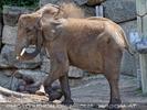 Die Elefanten Dusche 22