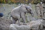 Elefanten 01