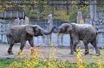 Elefanten 03