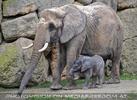 Elefanten Baby 01