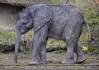 Elefanten Baby 03