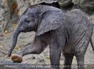 Elefanten Baby 04