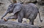 Elefanten Baby 05