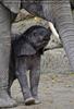 Elefanten Baby 06