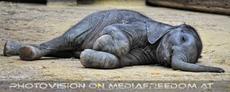 Elefanten Baby 09