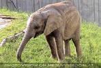 Elefanten Baby 1