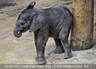 Elefanten Baby 11