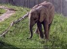 Elefanten Baby 2