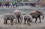 Elefanten Familie 01