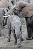 Elefanten Familie 02