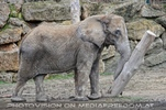 Elefanten Familie 03
