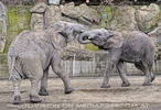 Elefanten Familie 04