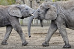 Elefanten Familie 05