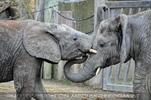 Elefanten Familie 06