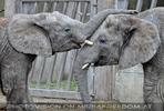 Elefanten Familie 07