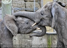 Elefanten Familie 09