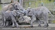 Elefanten Familie 10
